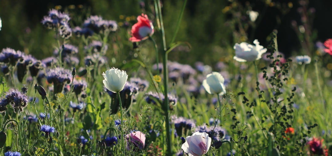 Flowers in a field on a sunny day